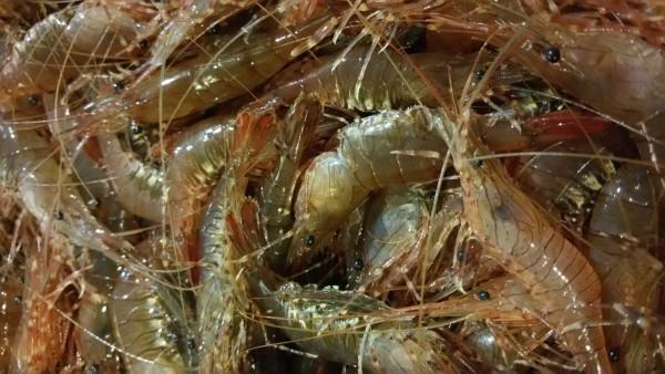 camarones-mariscos-marisquerias-en-valencia